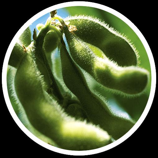 seguro para cultivos de verano